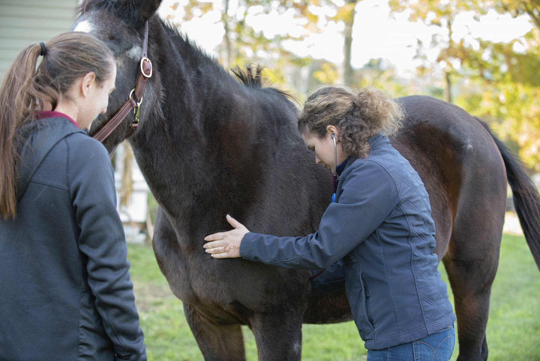 Equine Veterinarian in Townsend, MA   McGee Equine